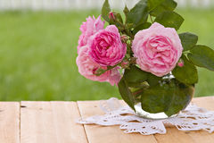 Fresh roses Royalty Free Stock Images