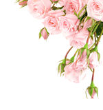 Fresh roses border royalty free stock images
