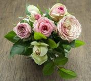 Fresh roses Stock Image