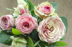 Fresh roses Royalty Free Stock Photos