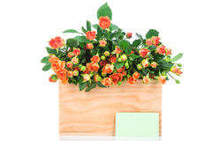 Fresh roses in the box Royalty Free Stock Photography