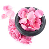 Fresh roses in mortar. Pink roses in mortar and rose petals on white background Stock Photography