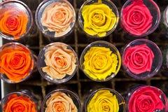 Fresh roses Royalty Free Stock Image