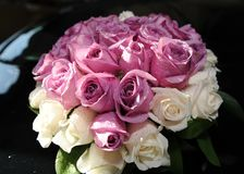 Fresh Roses with water mist Stock Image