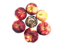Fresh and rotten apples Stock Photography