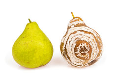 Fresh and rotten pears isolated Stock Image