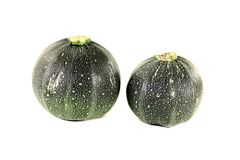 Fresh rotund zucchini. On a light background Stock Photography