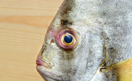 Fresh Round Batfish from fishery market. In outdoor sunlight and space for text Stock Photo
