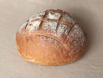 Fresh round bread Stock Photography