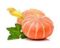 Fresh round pumpkin. Isolated on white background Royalty Free Stock Photos