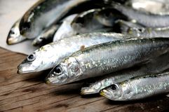 Fresh rsw sardines healthy diet alimentation Royalty Free Stock Photos