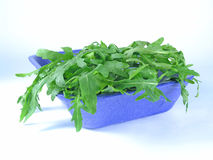 Fresh rucola Stock Photos