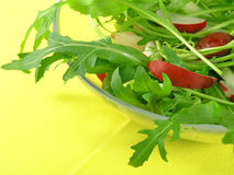 Fresh rucola Royalty Free Stock Images