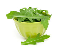 Fresh rucola in a bowl Stock Image
