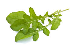 Fresh rucola leaves Royalty Free Stock Photos