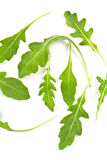 Fresh Rucola Leaves Stock Image