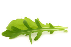 Fresh rucola leaves (Eruca sativa) Royalty Free Stock Photography