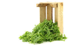 Fresh rucola leaves (Eruca sativa) Stock Photos