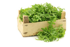 Fresh rucola leaves (Eruca sativa) Stock Images