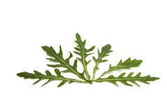 Fresh rucola leaves isolated Royalty Free Stock Photos