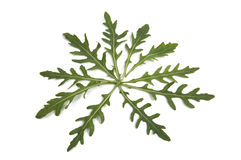 Fresh rucola leaves isolated Stock Images