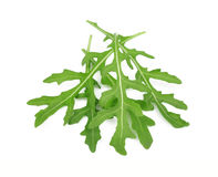 Fresh rucola leaves Stock Photography