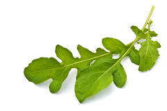 Fresh rucola leaves Stock Images