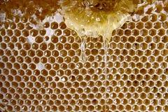 Fresh running and dripping honey Royalty Free Stock Photos