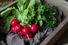 Fresh rustic harvest of radishes healthy vegetables in vintage basket Royalty Free Stock Photography