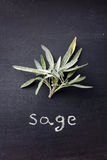 Fresh sage Stock Photo