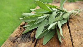 Fresh sage bunch on wooden table Royalty Free Stock Photos
