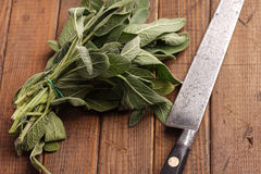 Fresh Sage Bundle Royalty Free Stock Photography