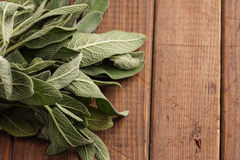 Fresh Sage Bundle Stock Photo
