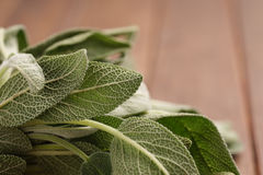 Fresh Sage Bundle Royalty Free Stock Photos
