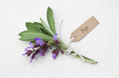 Fresh sage herb. With tag on a marble background royalty free stock photography