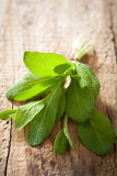 Fresh sage herb leaves on rustic wooden background Royalty Free Stock Images