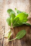 Fresh sage herb leaves on rustic wooden background Stock Image