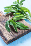 Fresh sage herb on pastel wooden table Royalty Free Stock Image