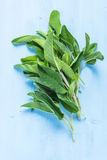 Fresh sage herb on pastel wooden table Royalty Free Stock Photos