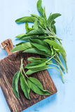 Fresh sage herb on pastel wooden table Stock Image