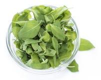 Fresh Sage (isolated on white) Stock Images