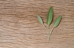 Fresh sage leaf on rustic wooden background. Sage Benefits Anti- Royalty Free Stock Image