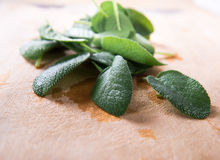Fresh sage leaves on cutting board (front view) Royalty Free Stock Photos