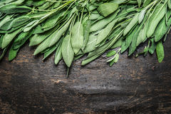 Fresh sage leaves on dark rustic wooden background, top view, border Royalty Free Stock Images