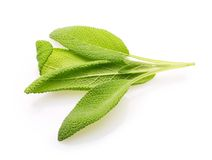 Fresh sage leaves Stock Images