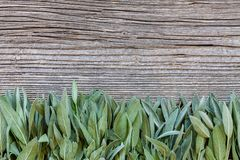 Fresh Sage leaves on old wooden table. Salvia officinalis. royalty free stock photos