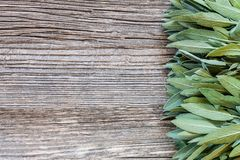 Fresh Sage leaves on old wooden table. Salvia officinalis. royalty free stock image
