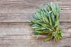 Fresh Sage leaves on old wooden table. Salvia officinalis. Top view, close up, copy spase stock photography