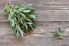 Fresh Sage leaves on old wooden table. Salvia officinalis. stock photography
