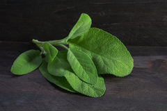 fresh sage leaves, salvia officinalis, on rustic dark wood, closeup stock photo